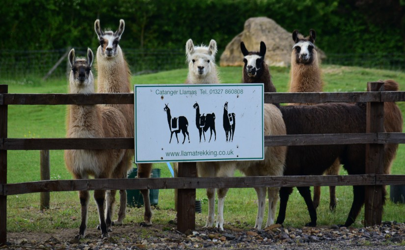 catanger llama farm photo
